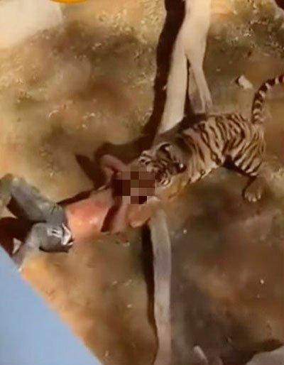 男子参观动物园,玩命跳笼被老虎咬