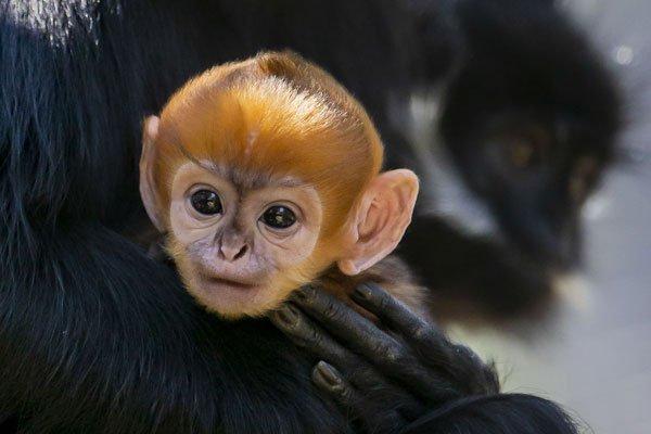 悉尼动物园,出美猴王